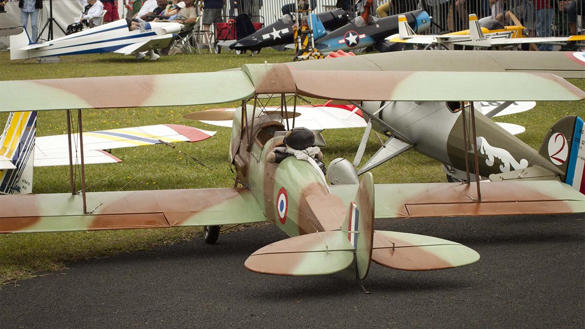 4629-Tigermoth